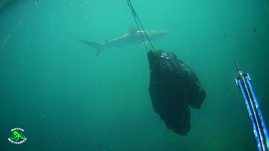 OG shark repellent in action AKA black plastic bag